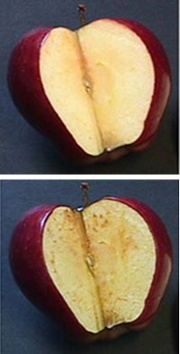 Apple oxidation